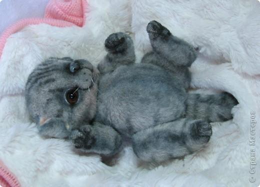 Бывают такие котята, которые буквально висят на маме-кошке и не могут насытиться)) По этому, вырастают упитанными, мурлыкающими от удовольствия, спокойными мылышами. И вот, наглядный примерчик)) Ну как же он любит покушать, и погреться о теплый животик))  фото 10