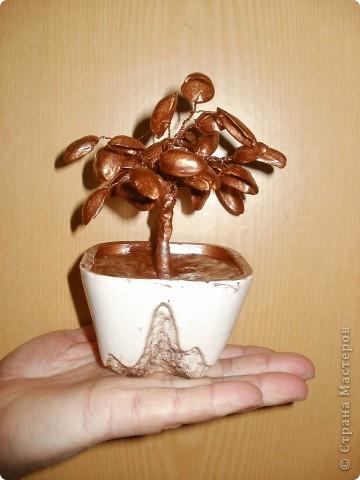 """А это моё """"денежное дерево"""""""
