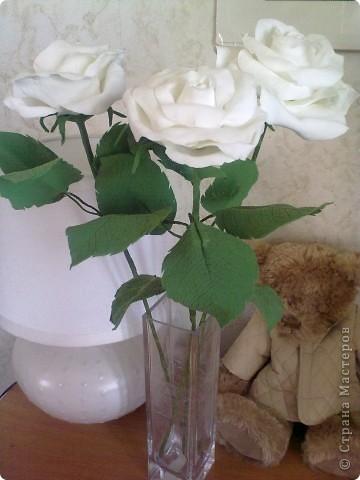 Розы в натуральную величину фото 3