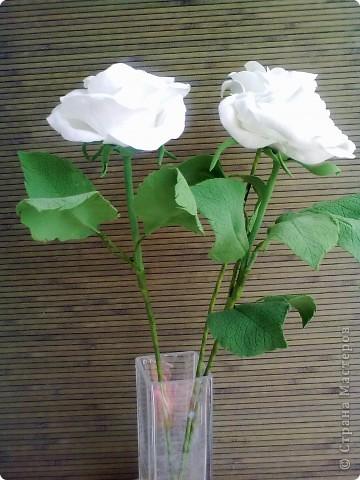 Розы в натуральную величину фото 2