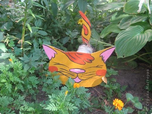 Озорные кошки. фото 1