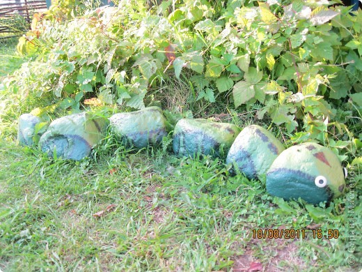 """Плодотворное лето. """"Живые"""" камни.  фото 2"""