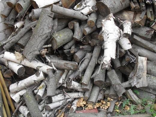 Во дворе лежит куча дров, вчера муж позвал меня и показал этот ПОДАРОК осени. ЗДОРОВО!!! фото 3