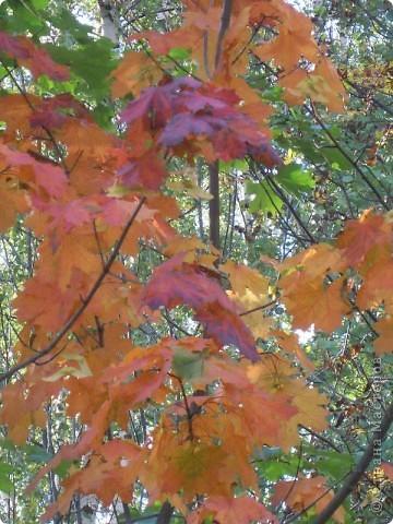 Панно сделано из кленовых листьев, проглаженных утюгом через бумагу. Цветы были заранее засушены как гербарий. Листочки, создающие рамку вырезаны из цветной бумаги- бархатной и простой. Фон картины нарисован акварелью. фото 3