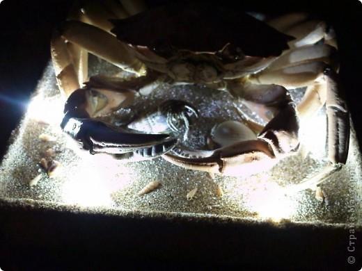 Крабик (внешнее освещение). фото 3