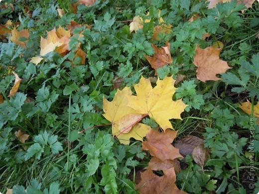 Панно сделано из кленовых листьев, проглаженных утюгом через бумагу. Цветы были заранее засушены как гербарий. Листочки, создающие рамку вырезаны из цветной бумаги- бархатной и простой. Фон картины нарисован акварелью. фото 5