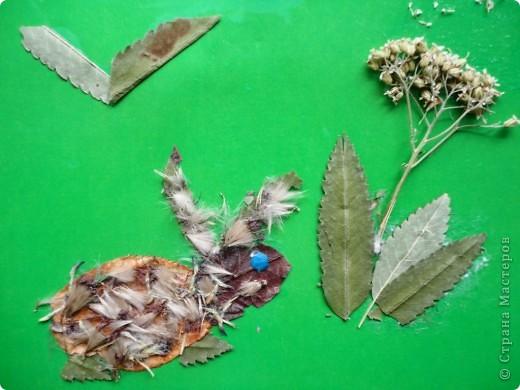 Продолжаю тему осенних листьев. В этот раз представляю работы второклассников. Зайчик Сергея Р. фото 2
