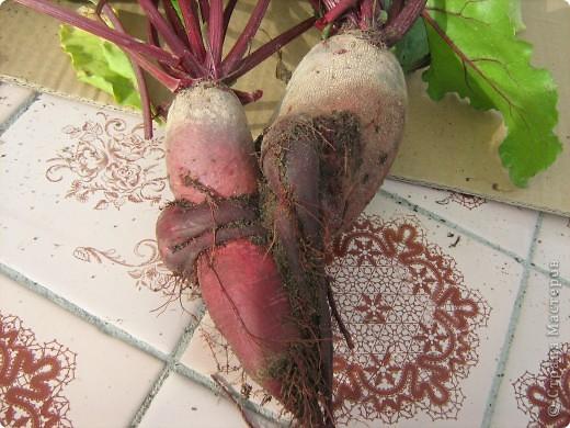 Начну с морковки и с небольшими комментариями. Такая морковка выросла уже в конце июля. Мы живем на севере и погода нас не балует. фото 7