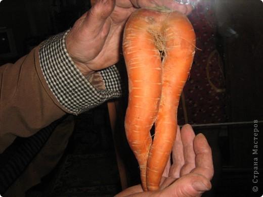 Начну с морковки и с небольшими комментариями. Такая морковка выросла уже в конце июля. Мы живем на севере и погода нас не балует. фото 4