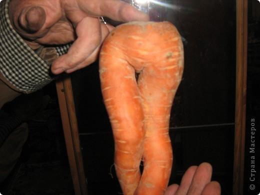 Начну с морковки и с небольшими комментариями. Такая морковка выросла уже в конце июля. Мы живем на севере и погода нас не балует. фото 5