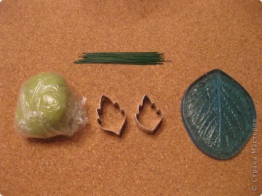 Веточка анемоны. Листья. фото 2