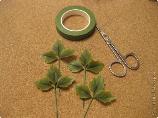 Веточка анемоны. Листья. фото 7