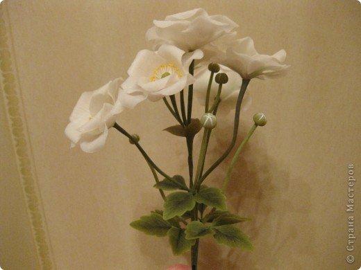 Веточка анемоны. Листья. фото 15
