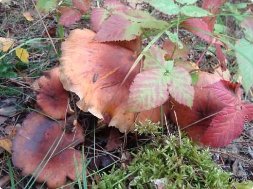 Лес у нас рядом. Только через пруд перейти (по плотине). И сразу же встречает меня вот такой красавчик, а может, красавица (кажется, она в юбочке). фото 23