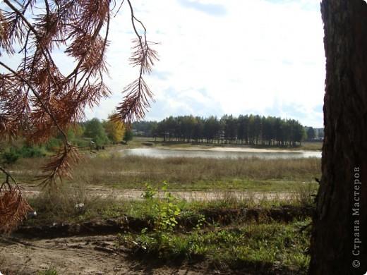 Лес у нас рядом. Только через пруд перейти (по плотине). И сразу же встречает меня вот такой красавчик, а может, красавица (кажется, она в юбочке). фото 33
