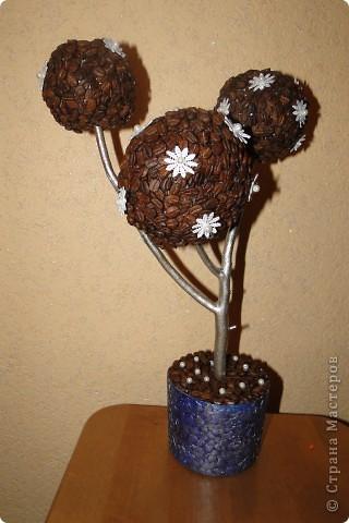 Мои кофейные деревья !! фото 3