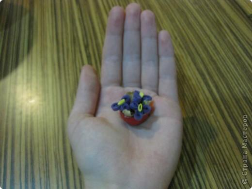 миниатюрные фиалки фото 2