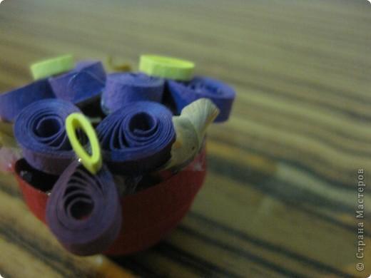 миниатюрные фиалки фото 1