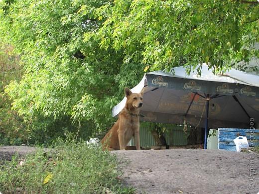 Очень люблю фоторепортажи про животных. Вот решила свой выложить. У нас на лодочной станции пополнение... фото 19