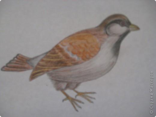 птички фото 3