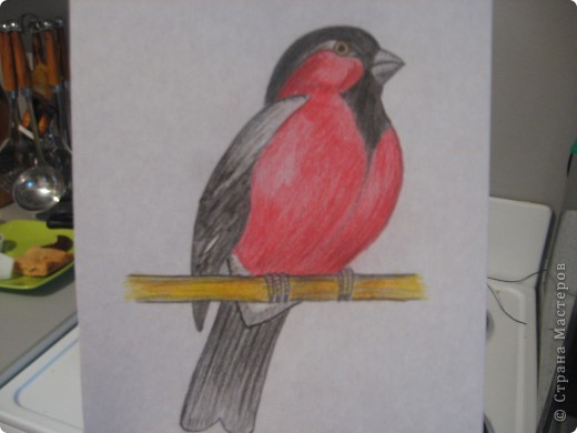 птички фото 1