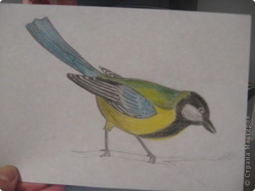 птички фото 5