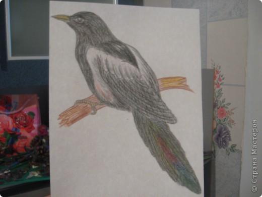 птички фото 4