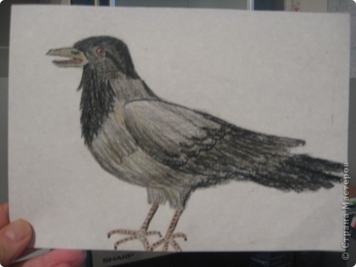 птички фото 2
