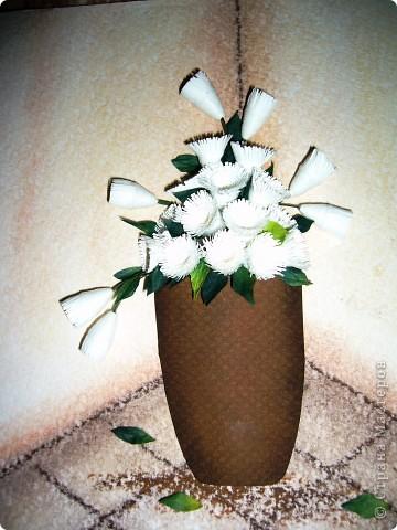 Белые хризантемы фото 1