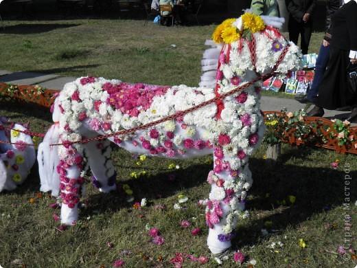 В сентябре у нас был день города. И, как обычно, состоялась выставка цветов. Вот какую красоту я там видела. Хочу с Вами поделиться))) Это Цветочная лошадка! фото 1