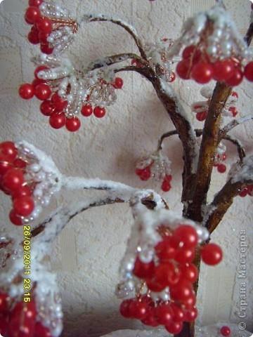 калина в снегу фото 3