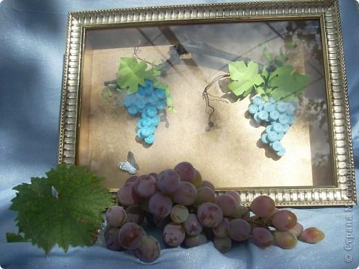 А это наш, настоящий виноград, вместе с моим)) фото 1
