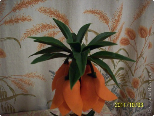 "Fritillaria (рябчик императорский ""Аврора"") фото 2"