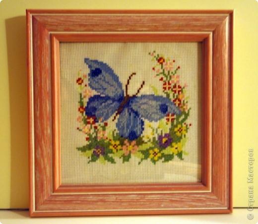 Синяя бабочка фото 1