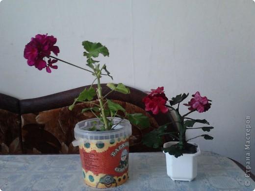 """Я очень люблю герань.Этот цветочек мне подарила моя мамочка.И когда он зацвел меня прямо понесло-""""надо сделать эту красоту"""". фото 2"""