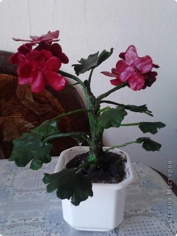 """Я очень люблю герань.Этот цветочек мне подарила моя мамочка.И когда он зацвел меня прямо понесло-""""надо сделать эту красоту"""". фото 1"""