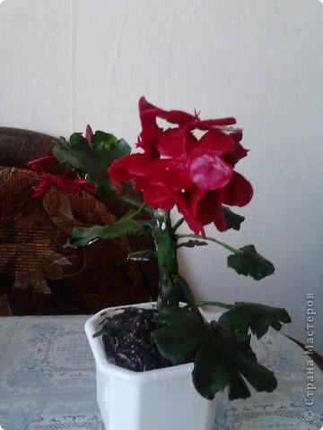 """Я очень люблю герань.Этот цветочек мне подарила моя мамочка.И когда он зацвел меня прямо понесло-""""надо сделать эту красоту"""". фото 5"""