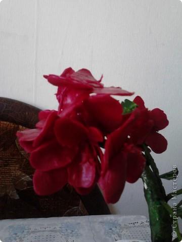 """Я очень люблю герань.Этот цветочек мне подарила моя мамочка.И когда он зацвел меня прямо понесло-""""надо сделать эту красоту"""". фото 4"""