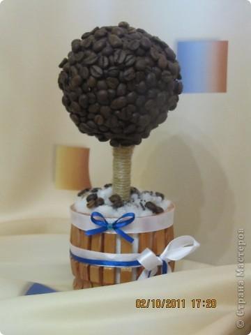 Кофейные деревца фото 3