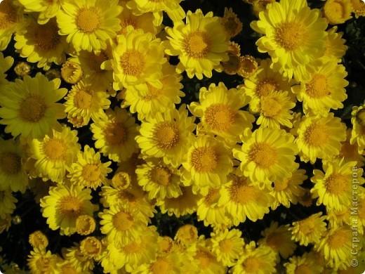 Всем любителям цветов хочу предложить прощальный парад цветов. фото 4