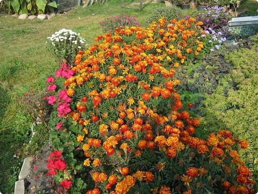 Всем любителям цветов хочу предложить прощальный парад цветов. фото 5