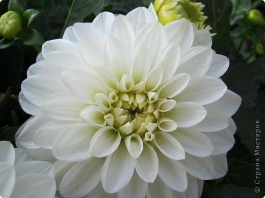 Всем любителям цветов хочу предложить прощальный парад цветов. фото 6