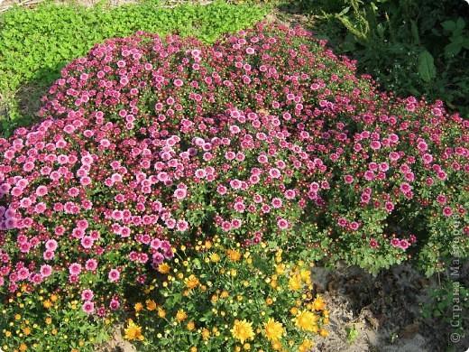 Всем любителям цветов хочу предложить прощальный парад цветов. фото 7
