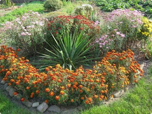 Всем любителям цветов хочу предложить прощальный парад цветов. фото 12