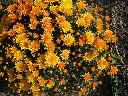 Всем любителям цветов хочу предложить прощальный парад цветов. фото 14