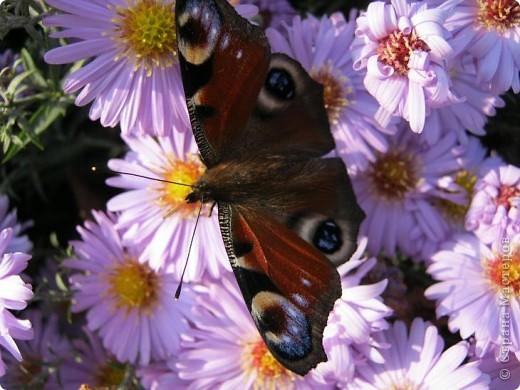 Всем любителям цветов хочу предложить прощальный парад цветов. фото 1
