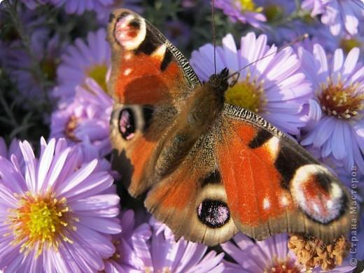 Всем любителям цветов хочу предложить прощальный парад цветов. фото 17