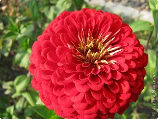Всем любителям цветов хочу предложить прощальный парад цветов. фото 20