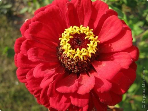 Всем любителям цветов хочу предложить прощальный парад цветов. фото 21