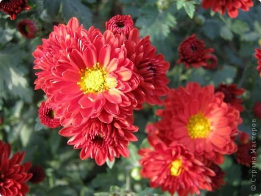 Всем любителям цветов хочу предложить прощальный парад цветов. фото 22